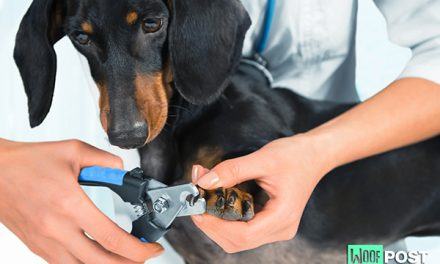 How To Trim Your Dog's Nails – Part One
