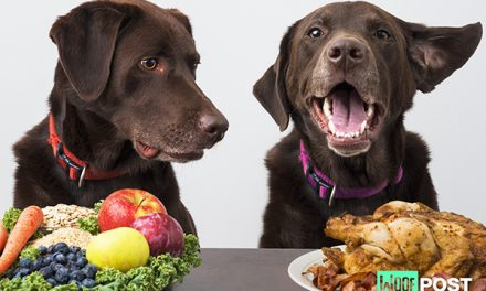"Can Dogs ""Go Vegan?"""