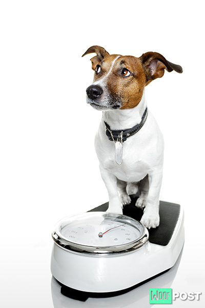How Do I Get My Dog To Gain Weight?