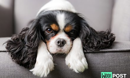 Health Problems To Watch Out For In Small Dogs