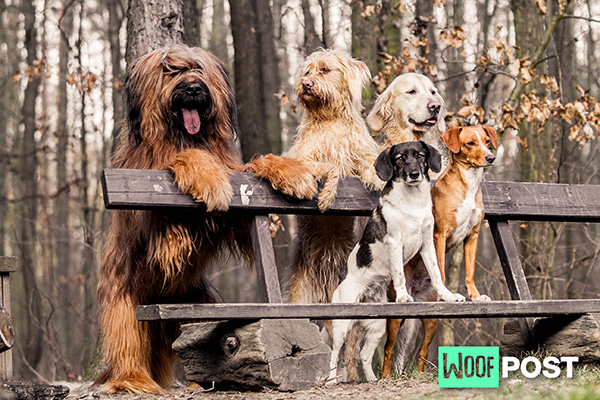 Even More Fun Facts About Dogs