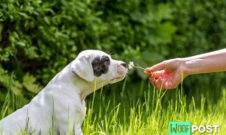 What To Do About Your Dog's Allergies – Part Two