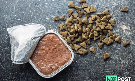 Wet or Dry Dog Food – Which Is Best For Your Dog?