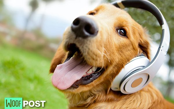 Do Dogs Like Music?