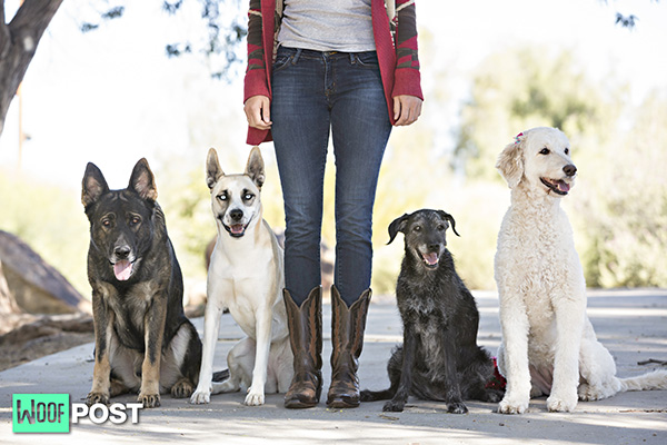 How To Manage A Multi-Dog Household