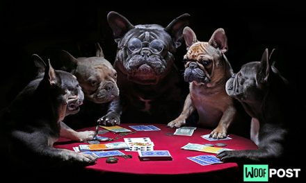 Why Is There So Much Art Showing Dogs Playing Poker?