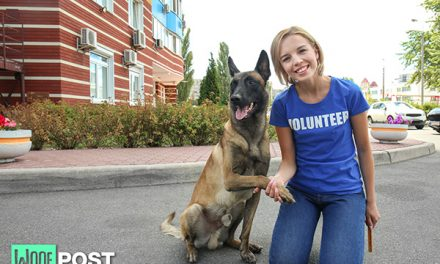 How To Help Your Local Dog Rescue Organization By Using Social Media