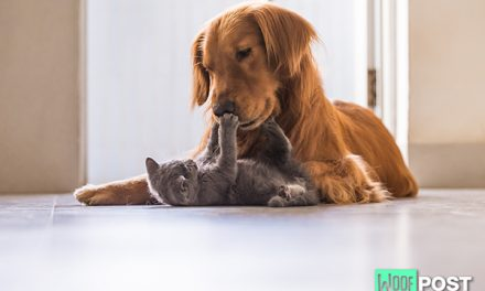 How To Introduce A Kitten To Your Dog