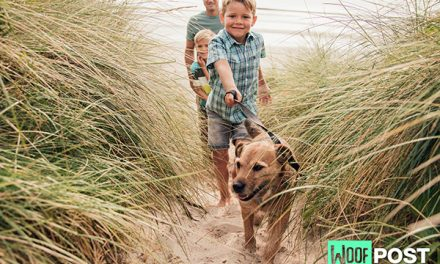 Can Your Dog Get Lyme Disease?
