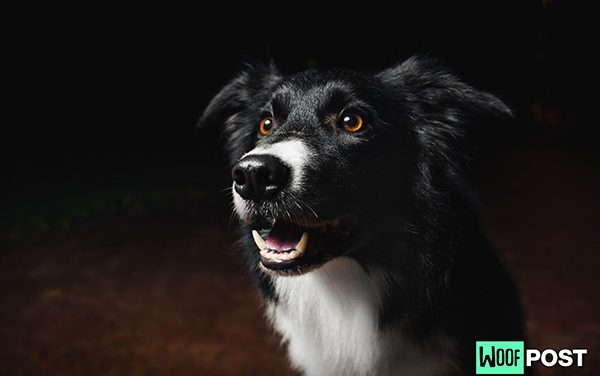 Two Poems To Celebrate Dogs