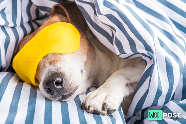 Reasons Why Your Dog Is Not Sleeping At Night