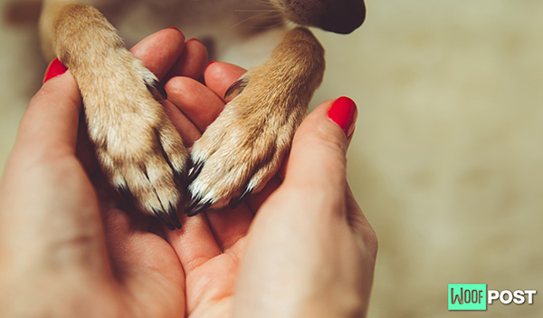 How To Make Your Dog's Paw Print Safely