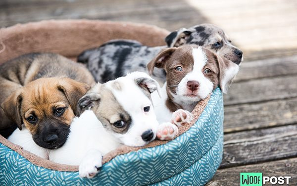 How To Pick A Puppy From A Litter – Part One