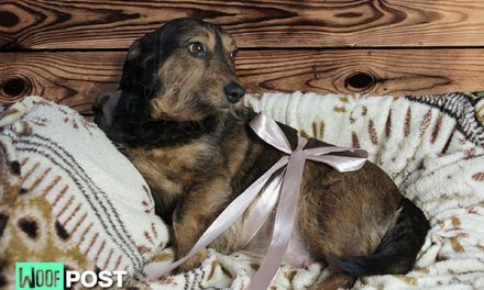How To Care For Your Dog While She Is Pregnant