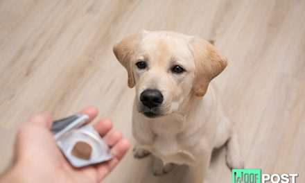 Should You Give Your Dog A Probiotic?
