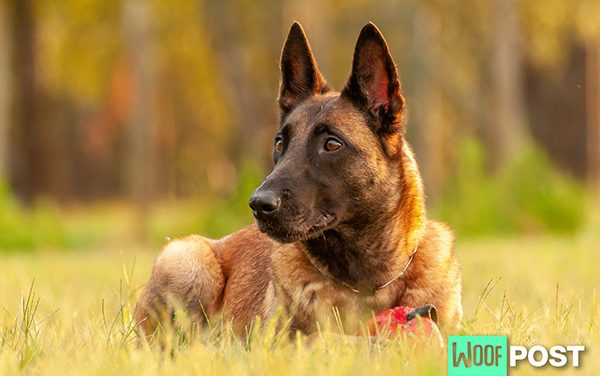 Heartworm In Dogs – What You Must Know