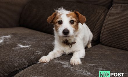 How To Control Dog Shedding