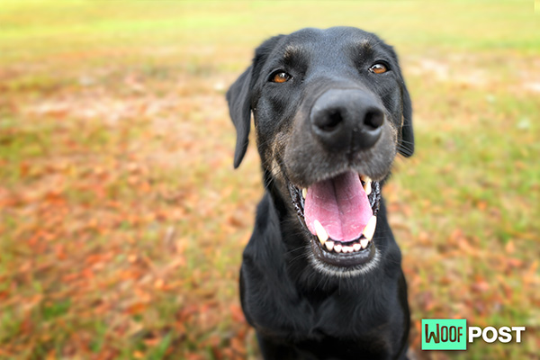 Do You Know These Five Surprising Things About Dogs?