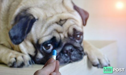 How To Get Your Dog To Take A Pill