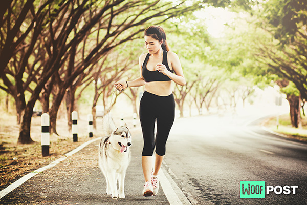 How To Train Your Dog To Run With You