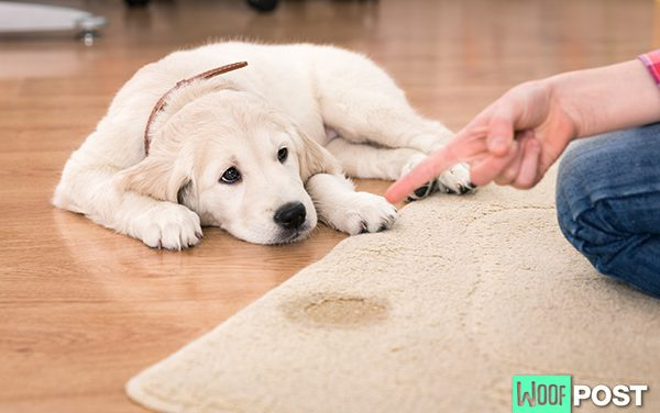 Why Yelling At Your Dog Doesn't Work