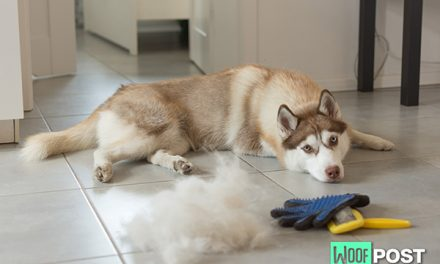 Which Dog Breed Is The Worst Shedder? These Five Vie For The Top Spot!