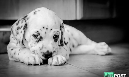 Why Does Your Dog Dig Into Your Carpet?