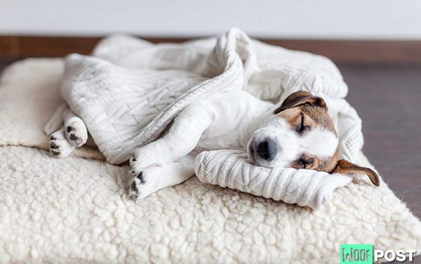 How To Choose The Right Bed For Your Dog