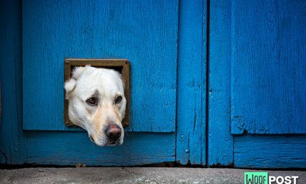 Dog Doors – What You Must Know