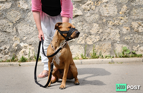 Dog Muzzles – What Owners Must Know