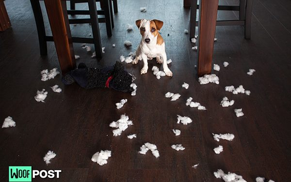 How To Dog Proof A Room