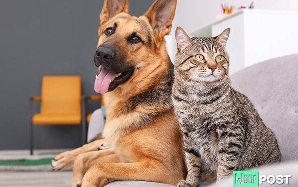 Five Reasons Why Dogs Are Better Than Cats