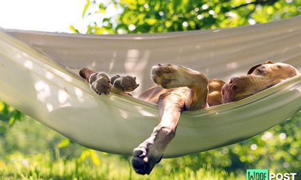 Five Common Summer Health Concerns And Your Dog