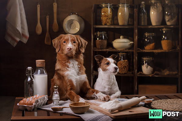 Should You Make Your Own Dog Food?