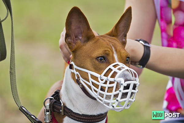 Muzzles – Which Type Is Right For Your Dog