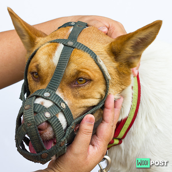 Training Your Dog To Accept A Muzzle