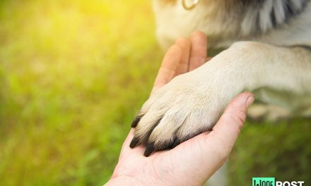 How To Care For Your Dog's Paw Pads