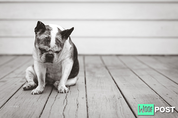 Do Dogs Get Lonely Being The Only Dog?
