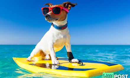 Dog Breeds That Can't (And Shouldn't!) Swim