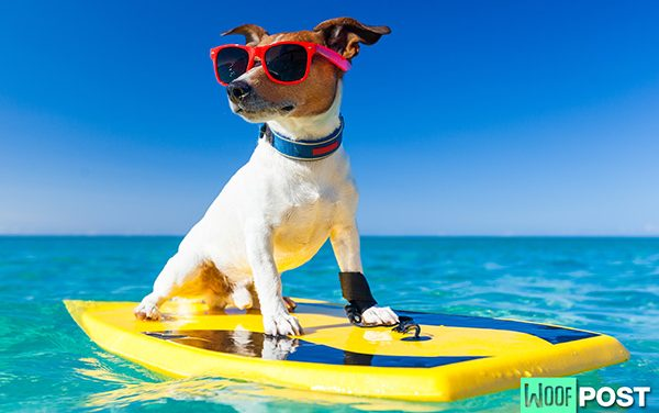 Protecting Your Dog From Hot Weather This Summer