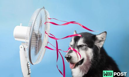 Which Dog Breeds Are Most At Risk From The Summer Heat?