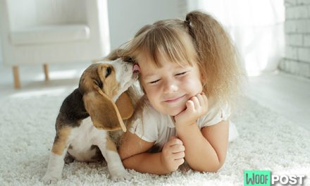 The Top Five Reasons Humans Love Dogs So Much