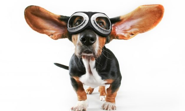 Dog Goggles – Fashion Accessory Or Necessity?