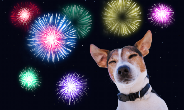 Why Are Dogs So Afraid Of Fireworks?